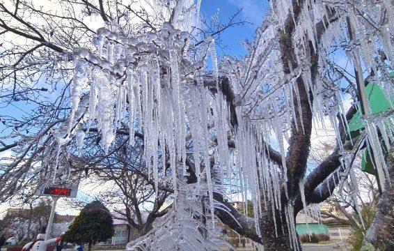 Ao menos 50 cidades de SC registraram temperaturas negativas nesta quarta